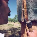Cork harvesting4