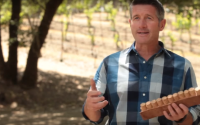 Corey Beck | Coppola Winery | 100% Cork Coalition (EN)