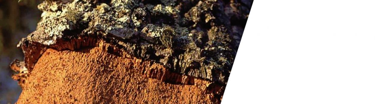 APCOR lança Brochura Ambiente