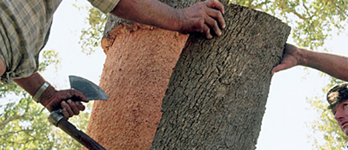Cork harvesting 3