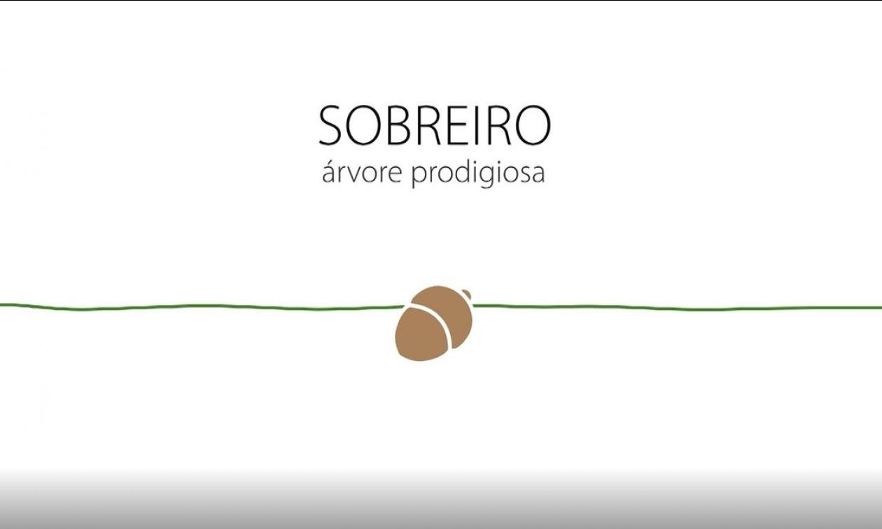 APCOR lança novo vídeo sobre o setor
