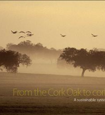 From Cork Oak to Cork