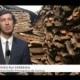 Casca de Ouro – A Cortiça em reportagem especial na SIC